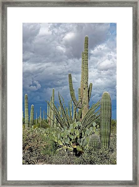 Slow Pokes - Sonoran Desert Framed Print