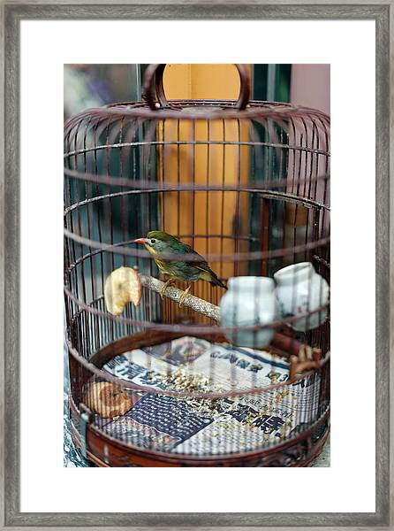 Small Bird In A Cage At A Bird Market Framed Print