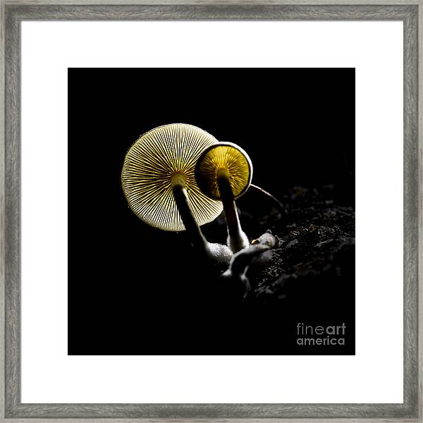 Small Fungus Growing On The Dead Wood Framed Print