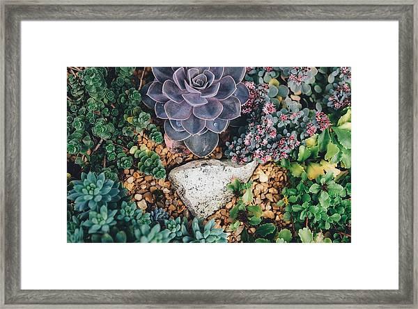 Small Succulent Garden Framed Print