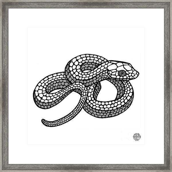 Framed Print featuring the drawing Smooth Green Snake by Amy E Fraser