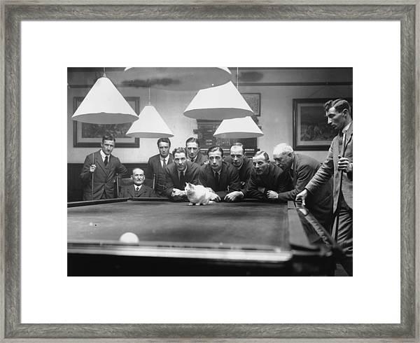 Snooker Cat Framed Print by Macgregor