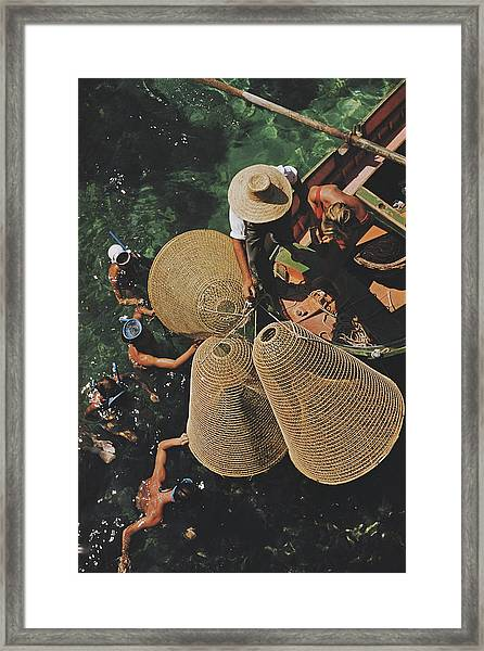 Snorkelling In The Shallows Framed Print