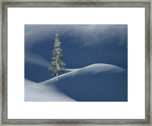 Snow Covered Tree And Mountains Color Framed Print