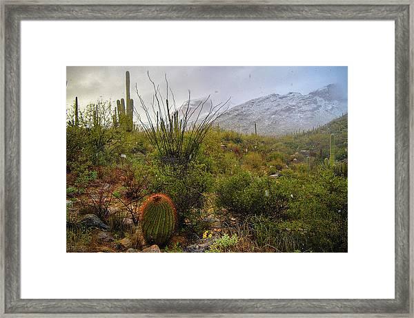 Snow In The Desert Framed Print