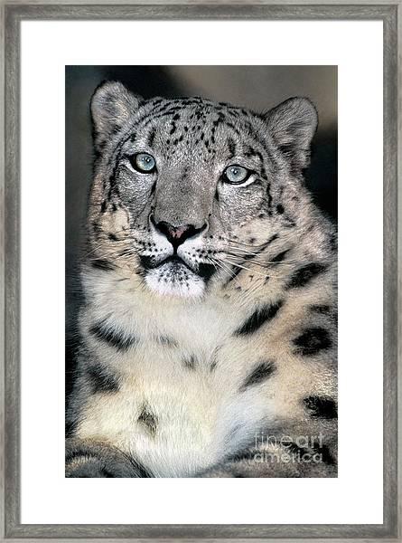 Snow Leopard Portrait Endangered Species Wildlife Rescue Framed Print