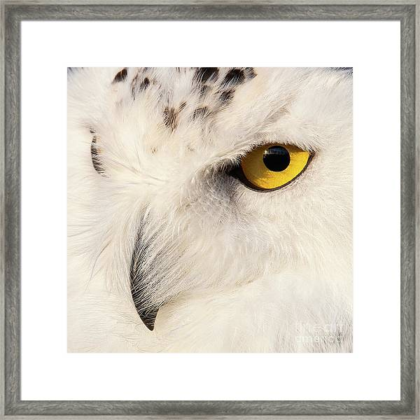 Snow Owl Eye Framed Print
