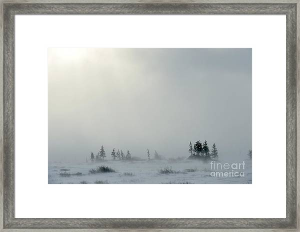 Snowstorm In Tundra Landscape With Framed Print
