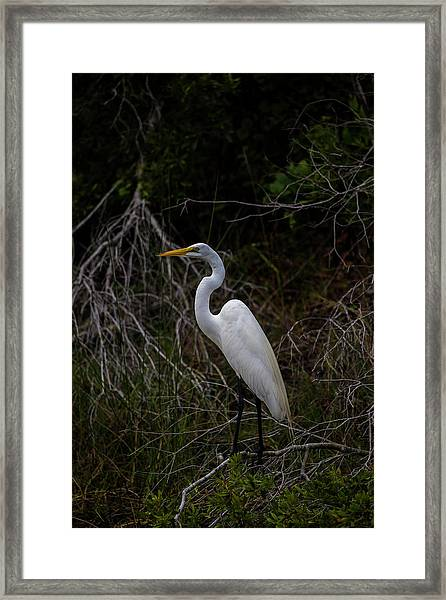Snowy Egret On A Hot Summer Day Framed Print