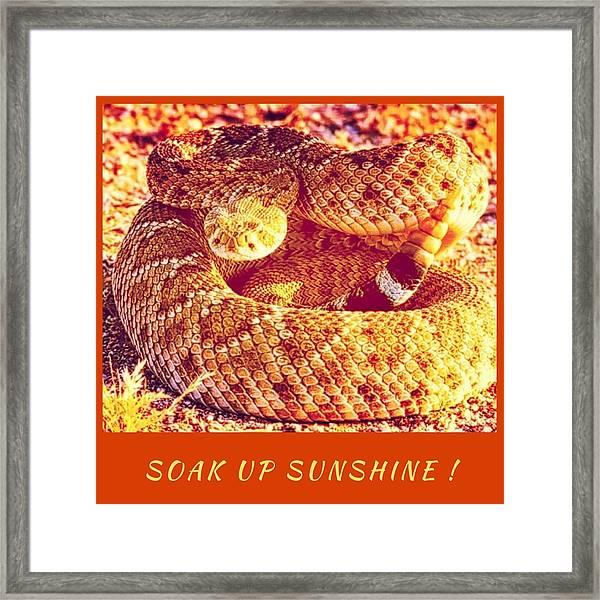 Soak Up Sunshine Framed Print