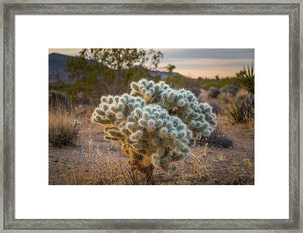 Soft And Inviting....not Framed Print
