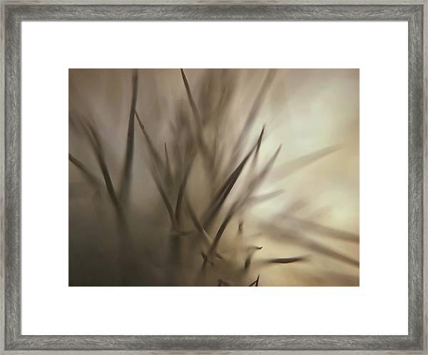 Soft And Spiky Framed Print