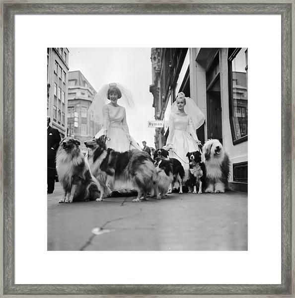 Soho Sheep Dogs Framed Print