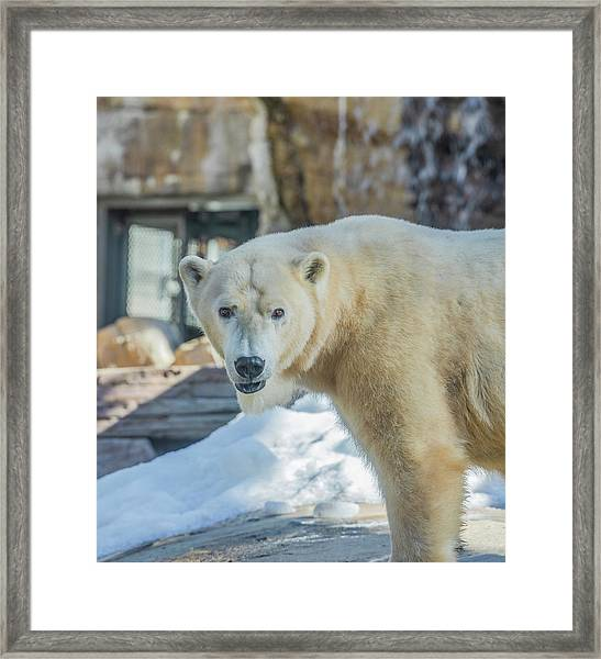 Someone's Hangry Framed Print