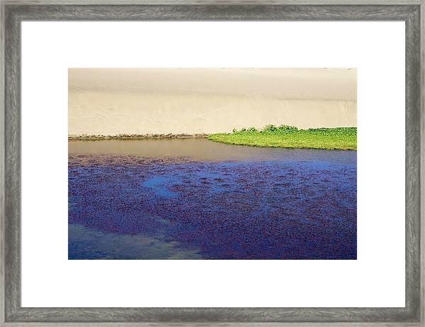 Sonoma Coast_al_560 Framed Print