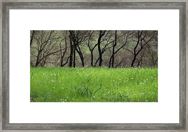 Sonoma Valley Rp_1148_18 Framed Print