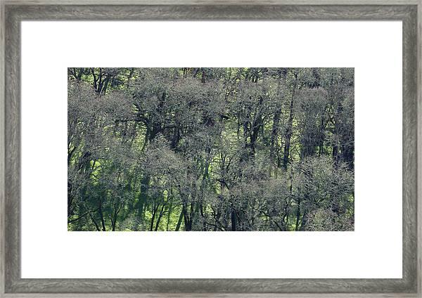 Sonoma Valley Rp_1310_18 Framed Print