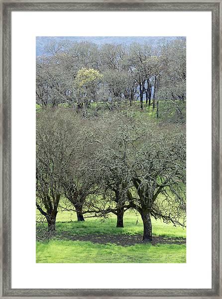 Sonoma Valley Rp_1439_18 Framed Print