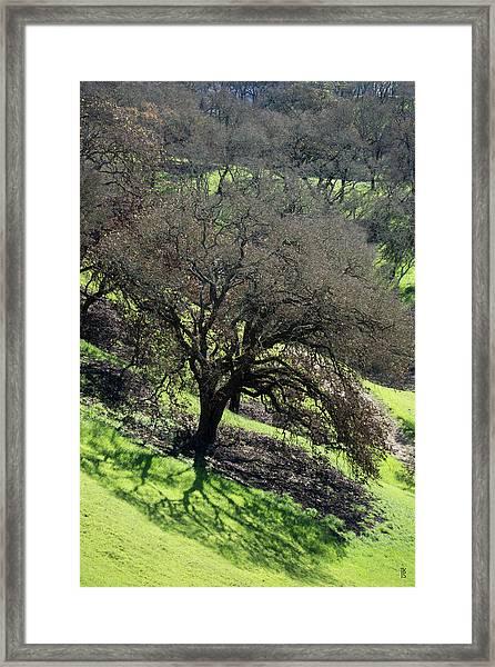 Sonoma Valley Rp_oak_1333_18 Framed Print