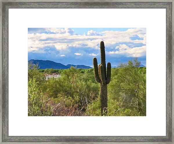Sonoran Desert Landscape Post-monsoon Framed Print