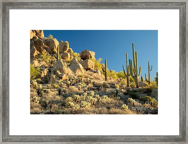 Sonoran Desert Landscape Framed Print