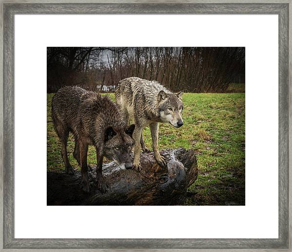 Sort Of Twins Framed Print