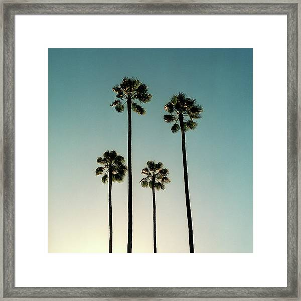 Spain, Sevilla, Palms Swaying In The Framed Print