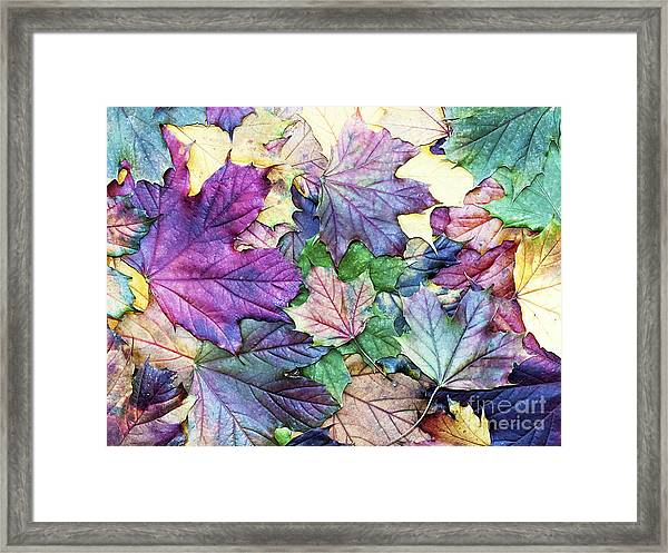 Special Colored Autumn Leaves Framed Print