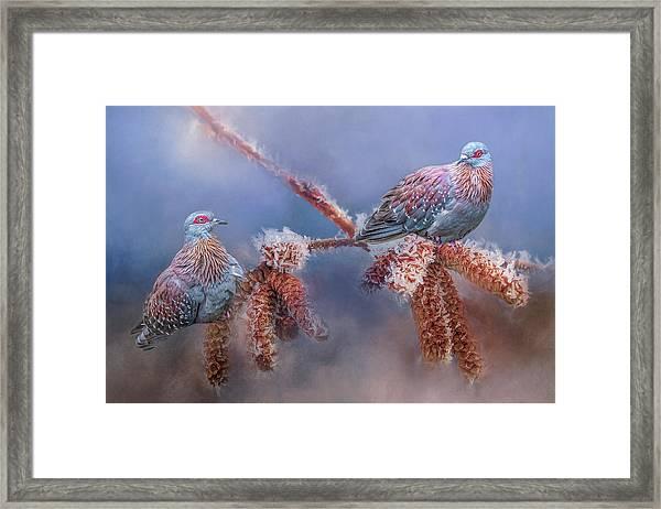 Speckled Pigeons Framed Print