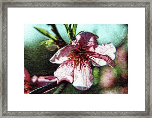 Spellbound Framed Print