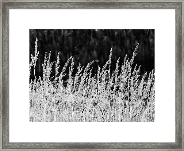 Spikes Framed Print