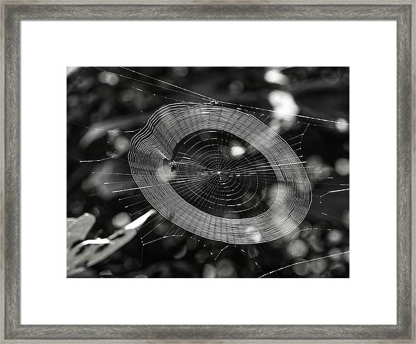 Spinning My Web Framed Print