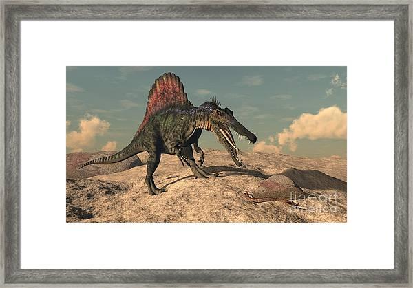 Spinosaurus Dinosaur Hunting A Snake - Framed Print
