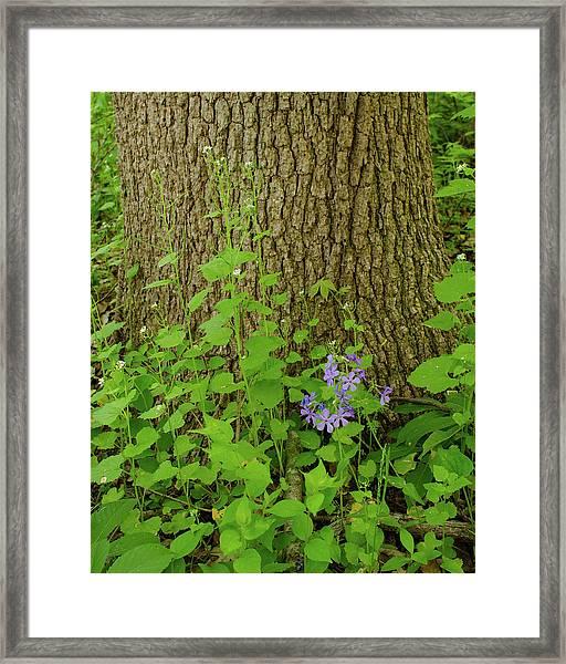 Splash Of Purple Framed Print