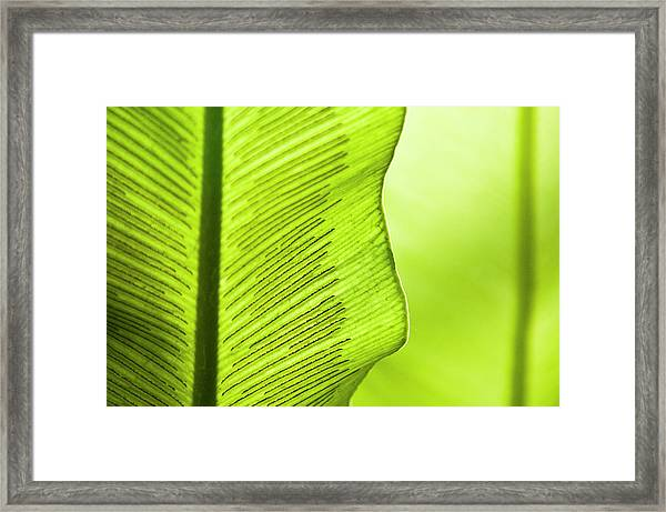 Spores Of A Fern Framed Print by By Ken Ilio