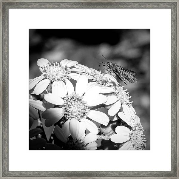 Spotlight To Pollinate Framed Print