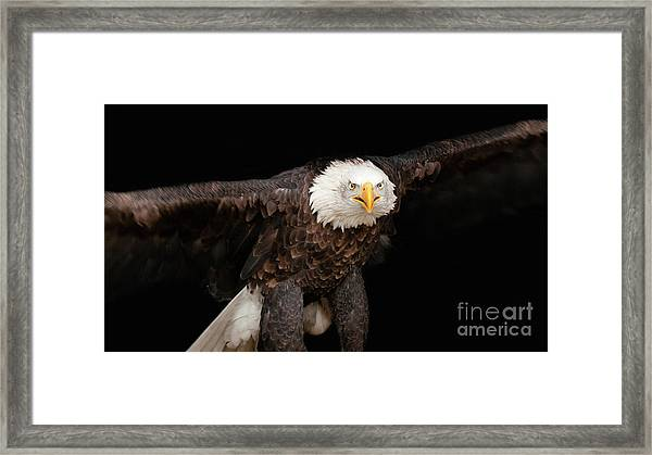Spread Your Wings And Fly Framed Print