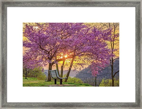 Spring Bench In Beaver 2 Framed Print