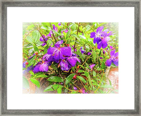 Spring Blossoms2 Framed Print