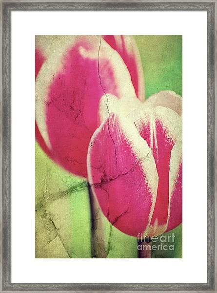 Spring Broken... II Framed Print