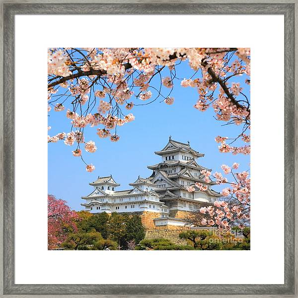 Spring Cherry Blossoms And The Main Framed Print