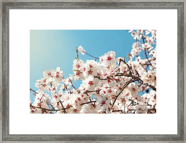 Spring Flowers. Spring Flowers Framed Print