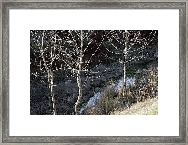 Spring Lake_743_18 Framed Print