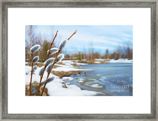 Spring Landscape With Willow Branches Framed Print