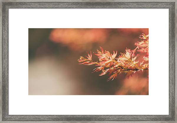 Spring Or Fall Framed Print