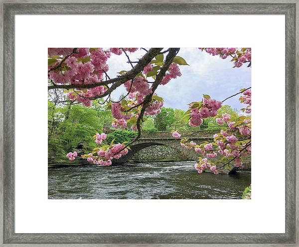 Spring Time In Windham  Framed Print