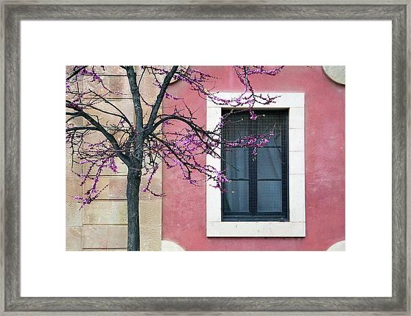 Springtime In Ciutadella - Saludos De La Primavera Framed Print