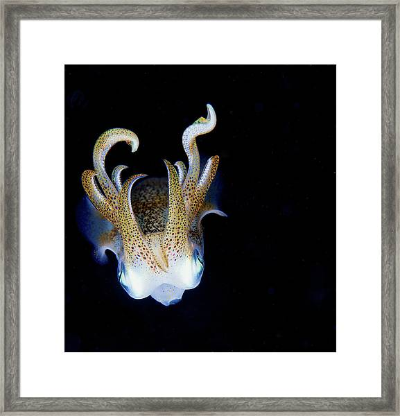 Squid At Night Framed Print
