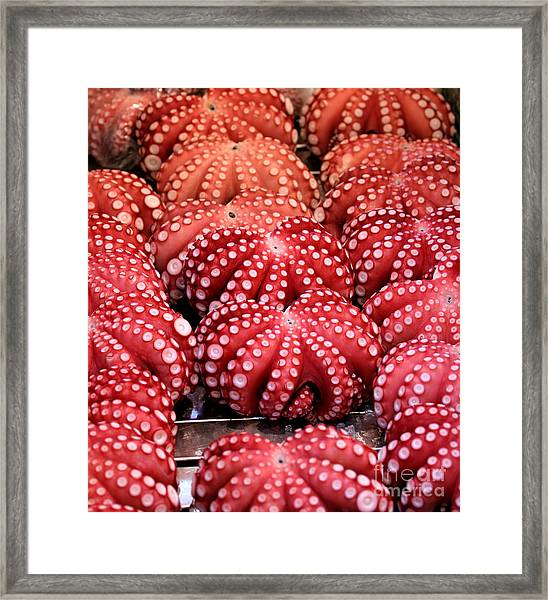 Squids At Food Market Framed Print by Henrik Winther Andersen