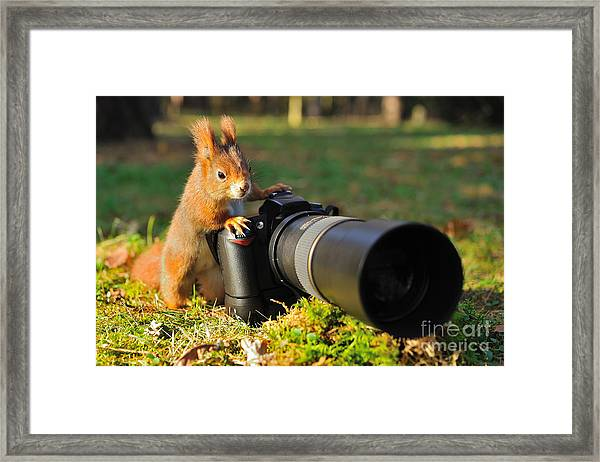 Squirrel As A Photographer With Big Framed Print